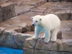 ぬいぐるみを北海道土産にお考えなら動物でも人気の白くまがおすすめ